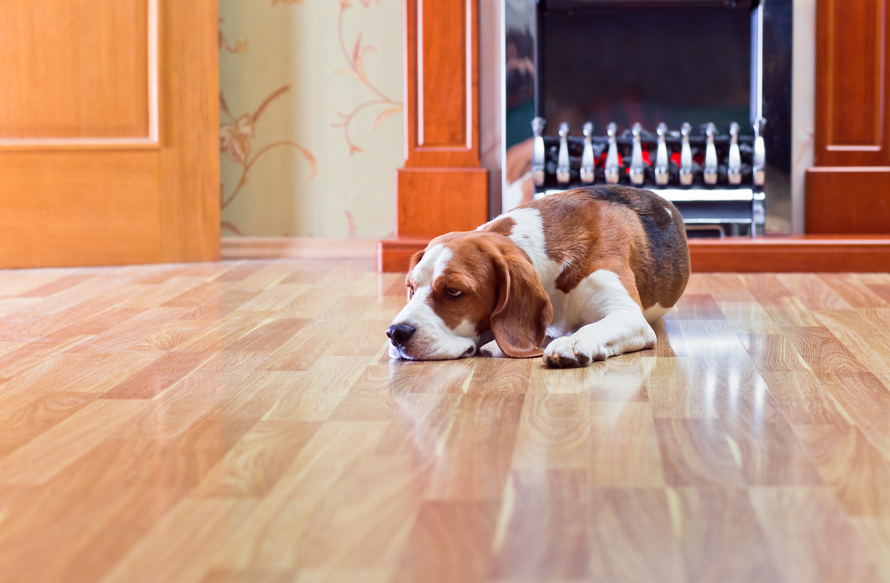 Floor FAQs: What Is the Best Flooring for Dogs?